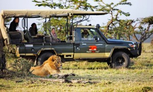Elephant Pepper Mara Camp daily game drives