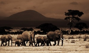 Amboseli-Photo-Safari