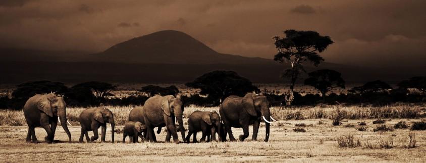 Amboseli-Photo-Safari