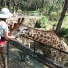 feeding giraffe Haller Park Sanctuary