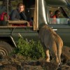 game-drive-in-the-masai-mara-from-offbeat-mara