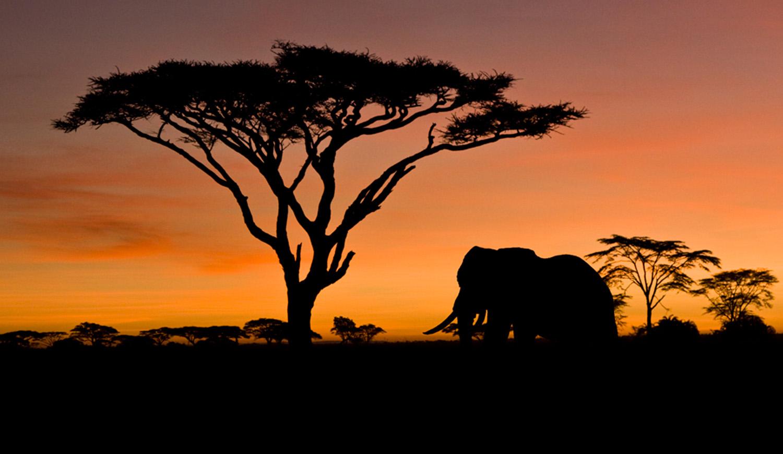 Lake Manyara Serengeti Amp Ngorongoro Safari