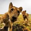 Lake Manyara & Ngorongoro Safari13