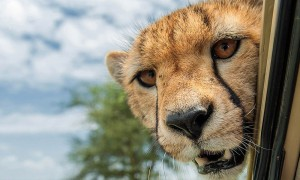 Lake Manyara, Serengeti & Ngorongoro Safari3