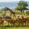 Mikumi-National-Park-Tanzania