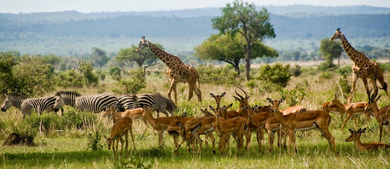 Mikumi Amp Ruaha Safari