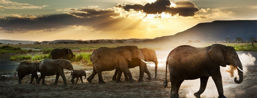 Lake Manyara & Ngorongoro Safari