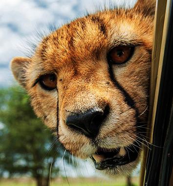 2017 kenya safari packages