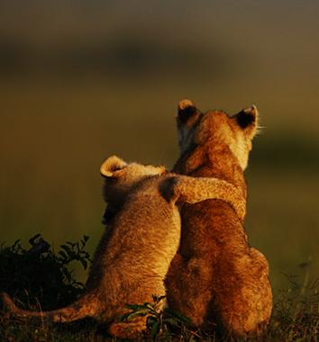 2017 rwanda safari packages