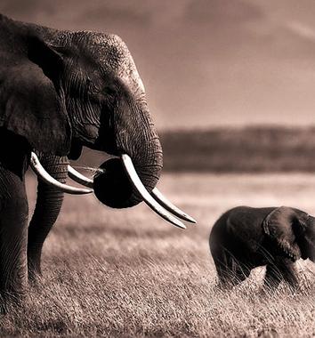 amboseli-safari