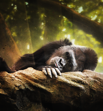 Rwanda Deluxe Safaris